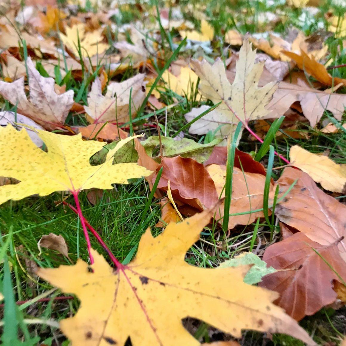Wir wünschen euch allen heute einen frohen Feiertag. Genießt die schöne Herbst-Landschaft  und bleibt auf jeden Fall gesund.Wir sehen uns sicherlich bald wieder gewohnt im Theater. Über aktuelle Neuerungen halten wir euch hier auf dem Laufenden #herbst #reformationstag #feiertag #theater #bleibtgesund #bisbald